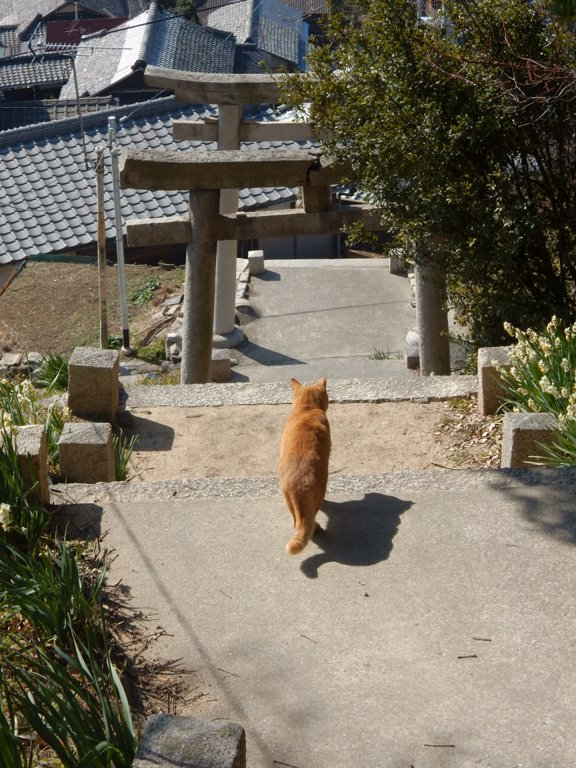 Cat in front of the gates to Toyotamahime Shrine in Ogijima